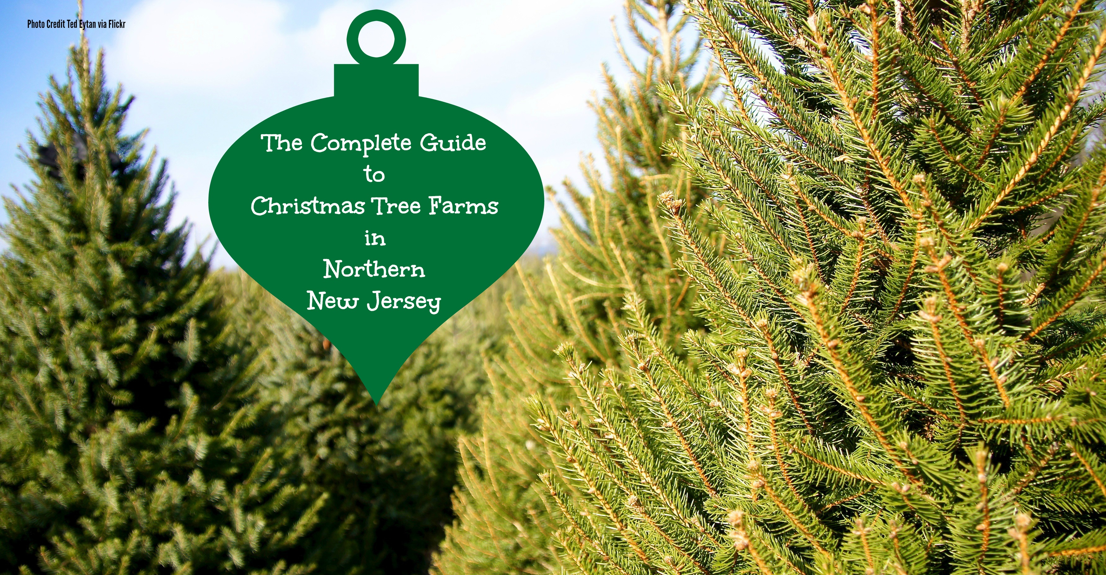 The Complete Guide To Christmas Tree Farms in North Jersey - Things ...