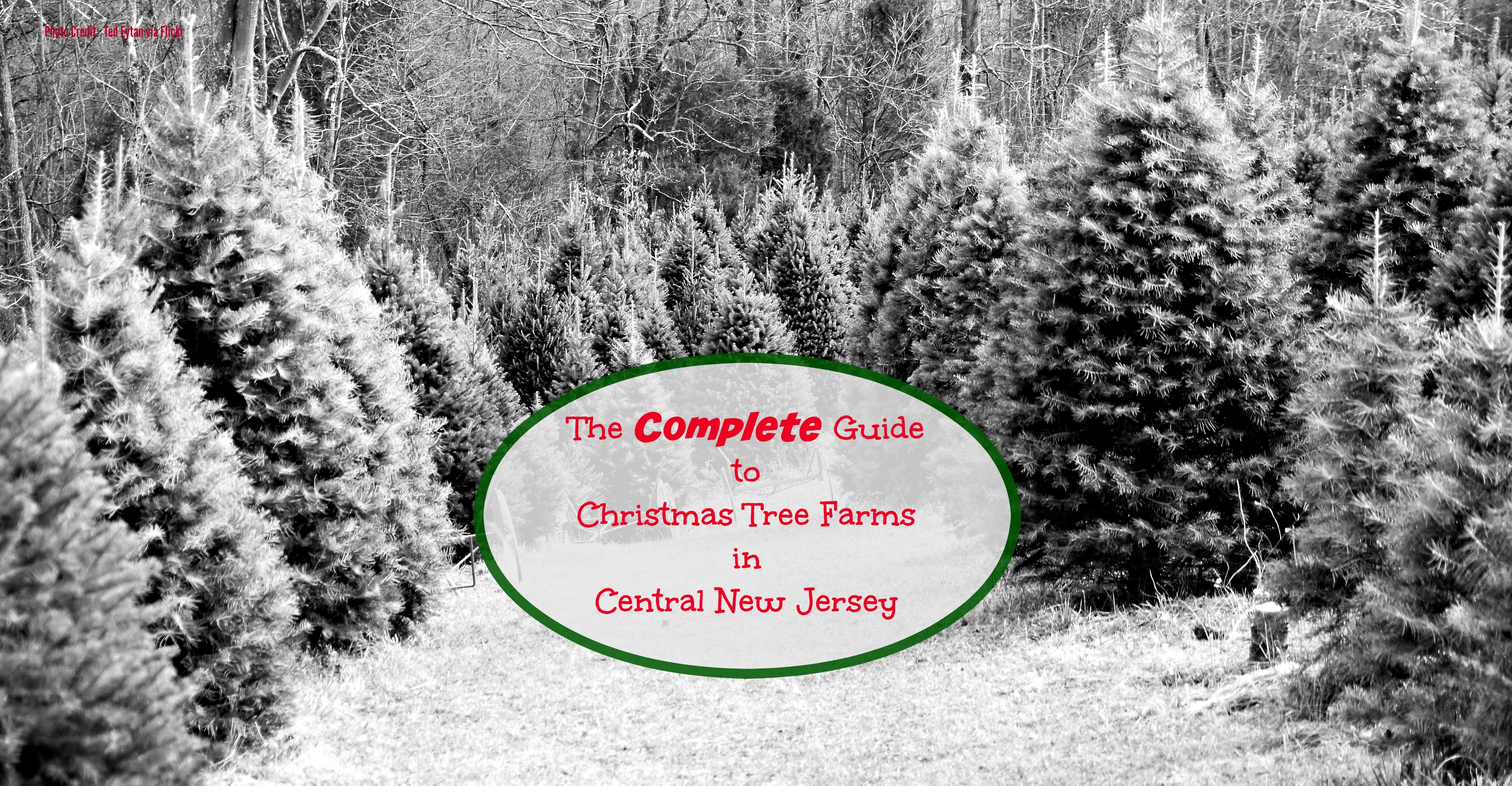 The Complete Guide to Christmas Tree Farms in Central Jersey ...