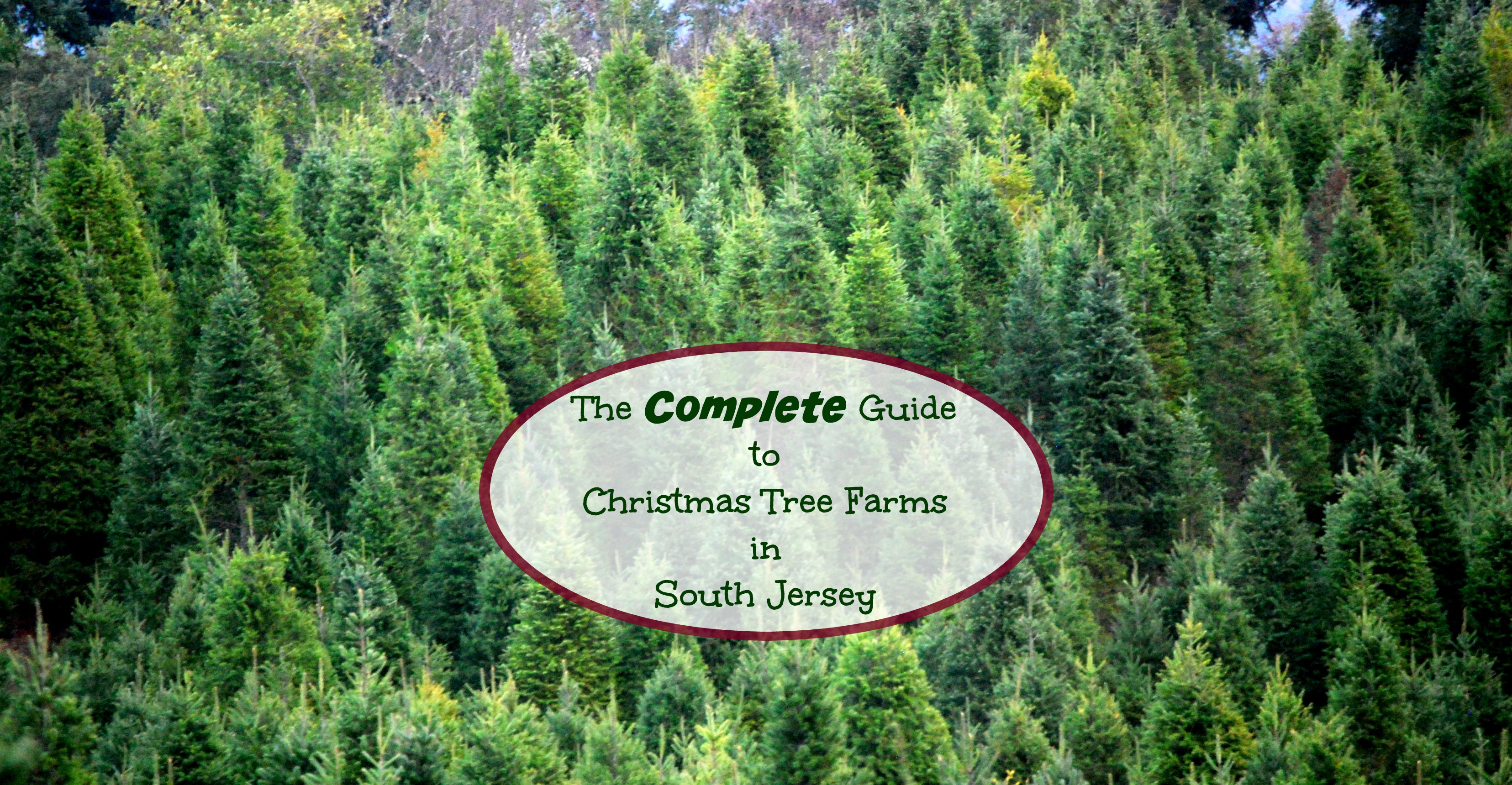 South Jersey Christmas Tree Farm